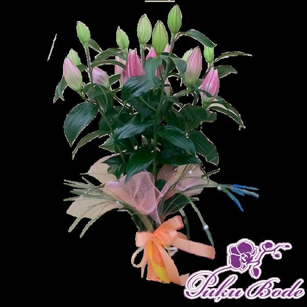 roza liliju smarza 20eur